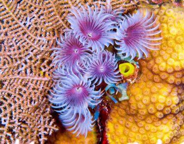 cayman brac corals 1060x834 min