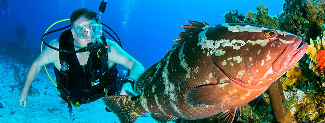 cayman brac diver and grouper 1060x403 min