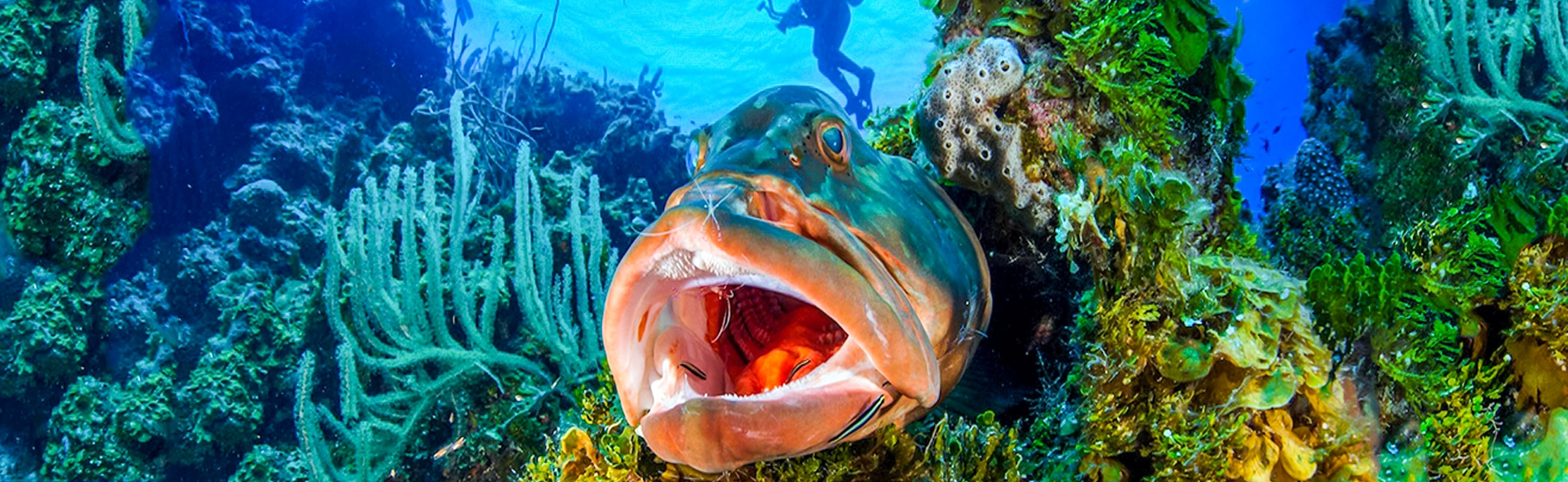 Cayman Brac waters are populated by abundant large and small marine life