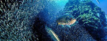 cayman brac tarpon reef 1060x403 min