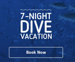 7-nights dive vacation